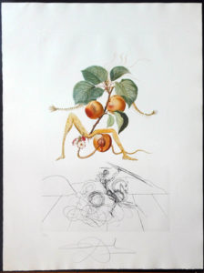 Salvador Dali - FlorDali (Les Fruits) - FlorDali Apricot