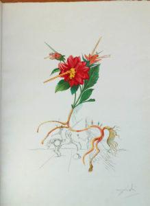Salvador Dali - Flora Dalinae (FlorDali) - Dahlia Unicornis