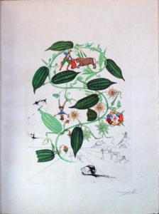 Salvador Dali - Flora Dalinae (FlorDali) - Passiflora Laurigera(Le Vine, Passion Flower)