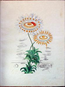 Salvador Dali - Flora Dalinae (FlorDali) - Chrysanthemium Fretescens (Marguerite)