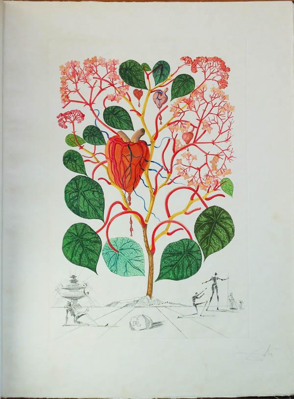 Salvador Dali - Flora Dalinae (FlorDali) - Anacardium Rexordans (Vegonia, Le Coeur)