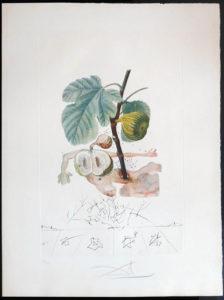 Salvador Dali - FlorDali (Les Fruits) - FlorDali Fig