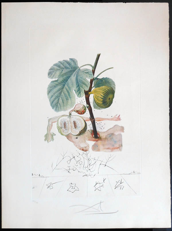 Salvador Dali - FlorDali (Les Fruits) - FlorDali Fig