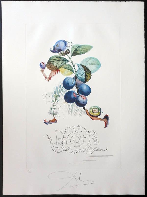 Salvador Dali - FlorDali (Les Fruits) - FlorDali Plum