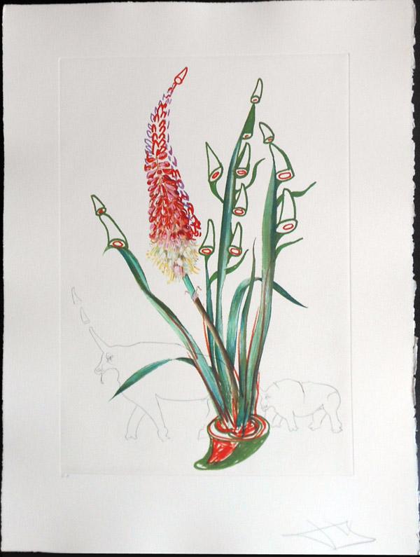 Salvador Dali - Surrealist Flowers, Florals - Stock + Rhinos, F